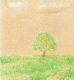 みかんの木.jpg